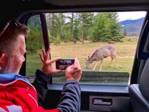 Taking-Photos-of-Animals-in-Jasper